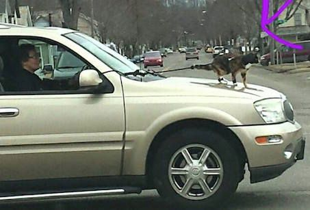 Cat riding on a car bonnet